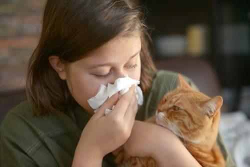 猫アレルギーの人