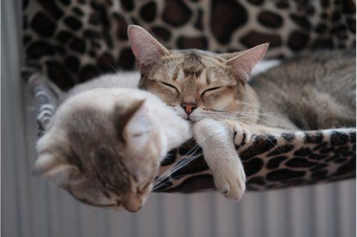 昼寝する2匹の猫