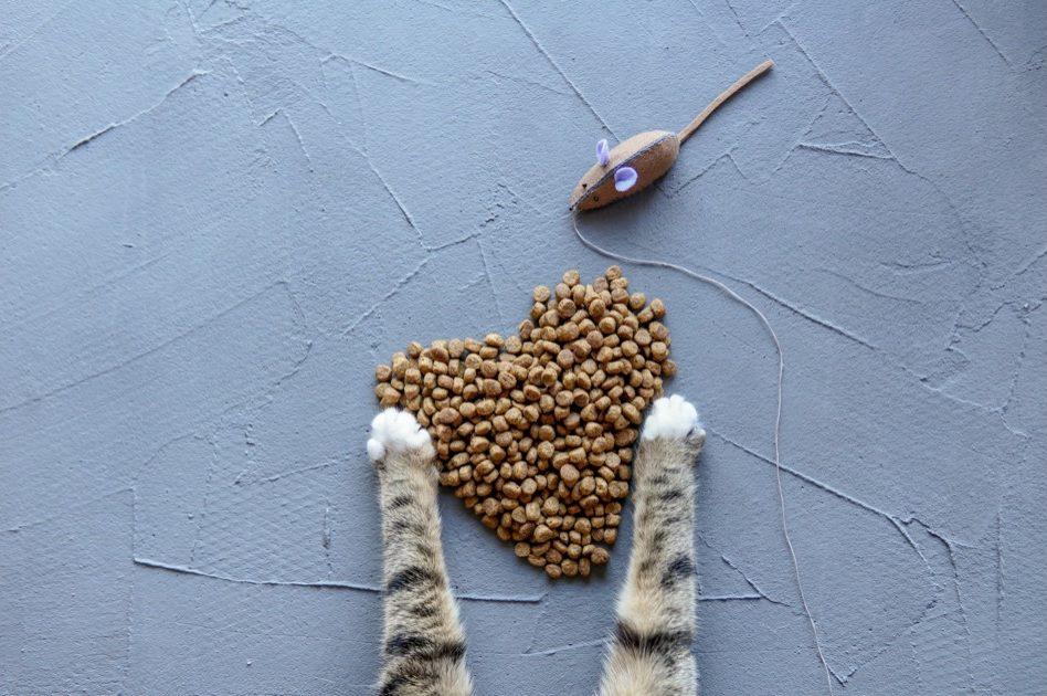 キャットフードと猫の手