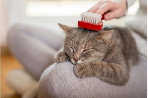 ブラッシングでくつろぐ猫