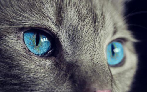 明るい場所で撮った猫