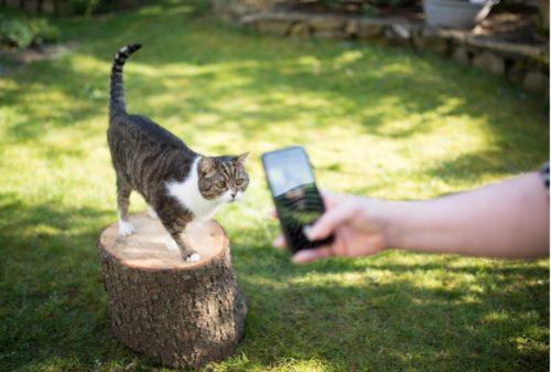 野外撮影 猫