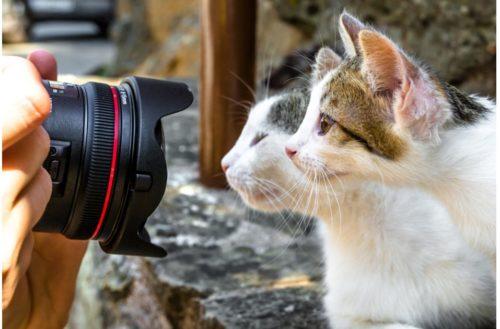カメラと猫