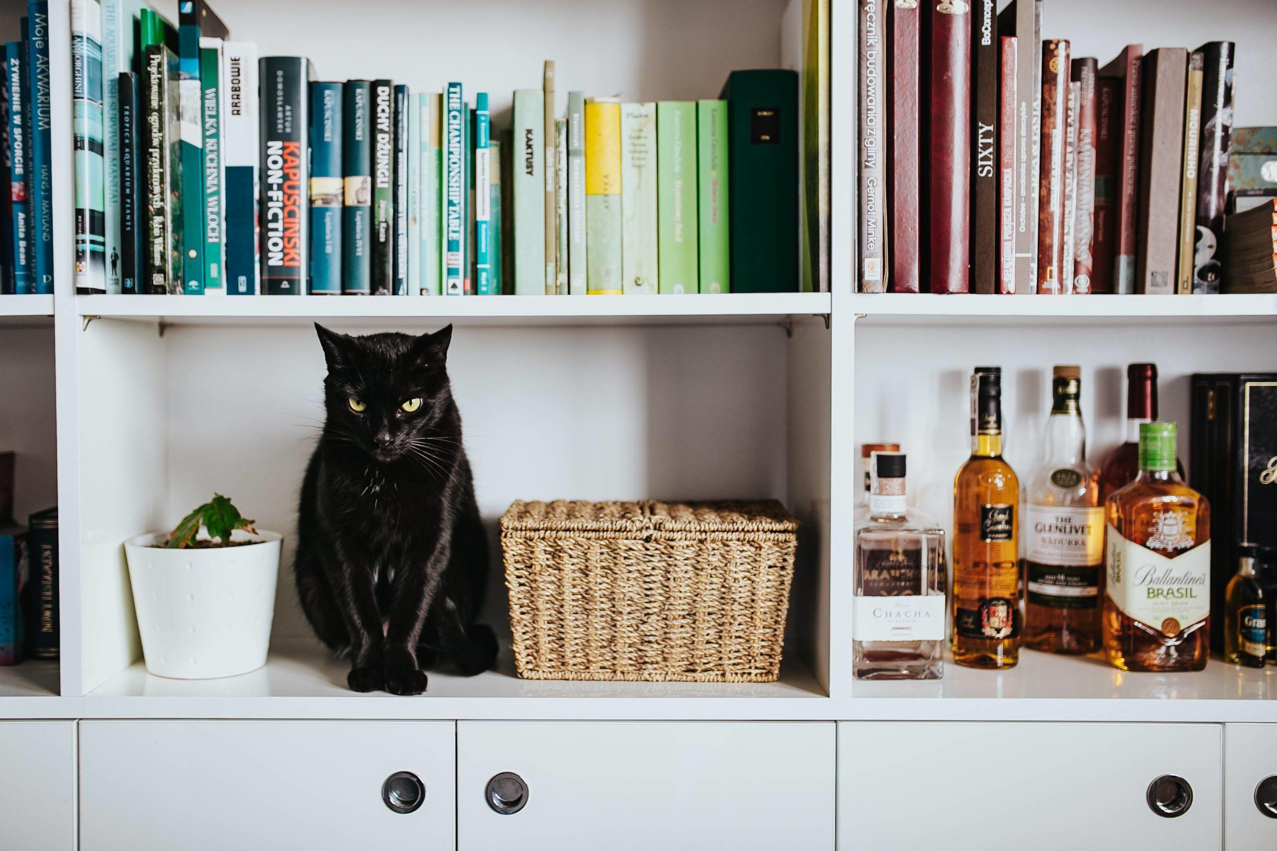 本棚にいる猫